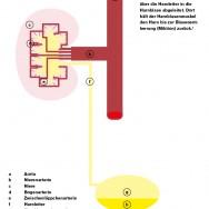 Infografik_hellblau